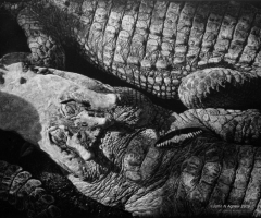 John Agnew - Crocodile Dreams