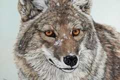 Judy Fairley - Coyote Winters